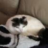 Nicki3366's avatar