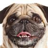 NickParamonte's avatar
