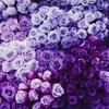NicoleHyuga469's avatar
