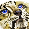 nicovar60's avatar