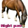 nightpawbabydiva's avatar