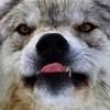 nightshadewolf's avatar