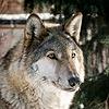 nightwolf1967's avatar