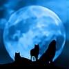 nightwolf3524's avatar