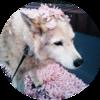 NijiSten's avatar
