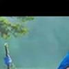 Nilasha's avatar
