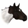 NimahBean's avatar