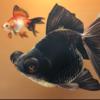 Ninjacompany's avatar