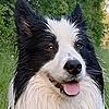 NiWo21k's avatar