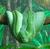 No1ProudSlytherin's avatar