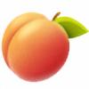 Noceat's avatar