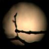 Nocturnal-Amnesia's avatar