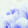 nomatterwhy's avatar