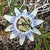 noodle8642's avatar