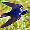NorthernSwallow-Tale's avatar