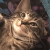 notuni69's avatar