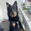 Nozomare98's avatar