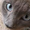NPLMxAndi's avatar