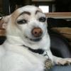 nuggetgottabenasty's avatar