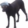 nyancatwaffles's avatar