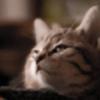 Nyiraferrox's avatar
