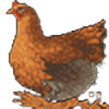 o-Oxalis-o's avatar