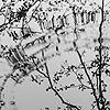 Oana1a's avatar