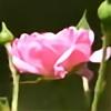 Ocheewa's avatar