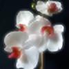 ochman451's avatar