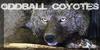 Oddball-Coyotes's avatar