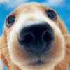 OdPuppy's avatar