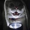 ok-blackstar's avatar