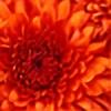 ola1975's avatar