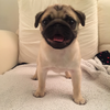 Oliverthepug's avatar