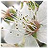 ollciak's avatar