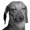 oLlIe-NiI's avatar