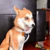 Olly2345's avatar