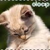 Olocip's avatar
