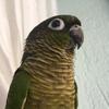Omuzim's avatar