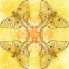 oneclicknirvana's avatar