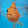 onojk123's avatar