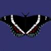 OokamiAya's avatar