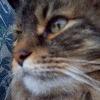 opalmermaid's avatar
