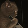 ophietoffee's avatar