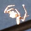 Opll9's avatar