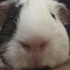 OrangeJuuce's avatar