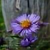 OrangeMusic34's avatar