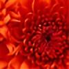 orangesprinkles's avatar