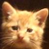 orangetabbykitten's avatar