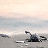 Orfanoudakis's avatar